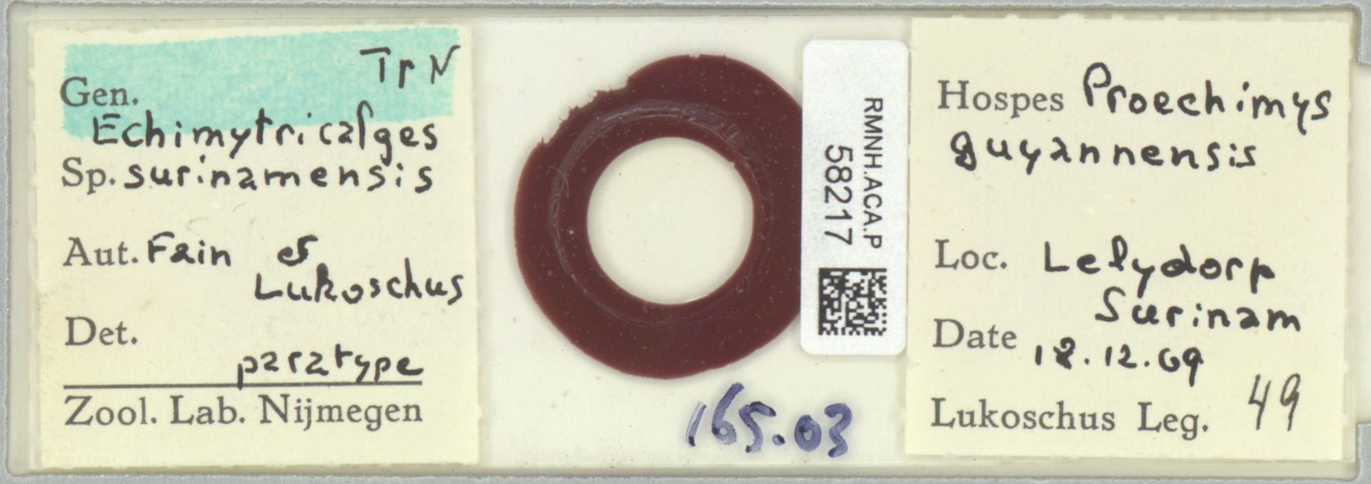 RMNH.ACA.P.58217   Echimytricalges surinamensis Fain & Lukoschus