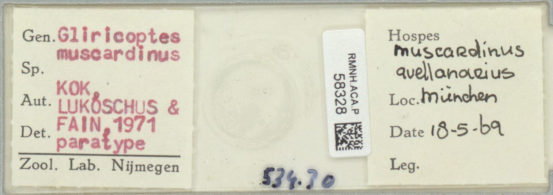 RMNH.ACA.P.58328 | Gliricoptes muscardinus Kok, Lukoschus & Fain. 1971