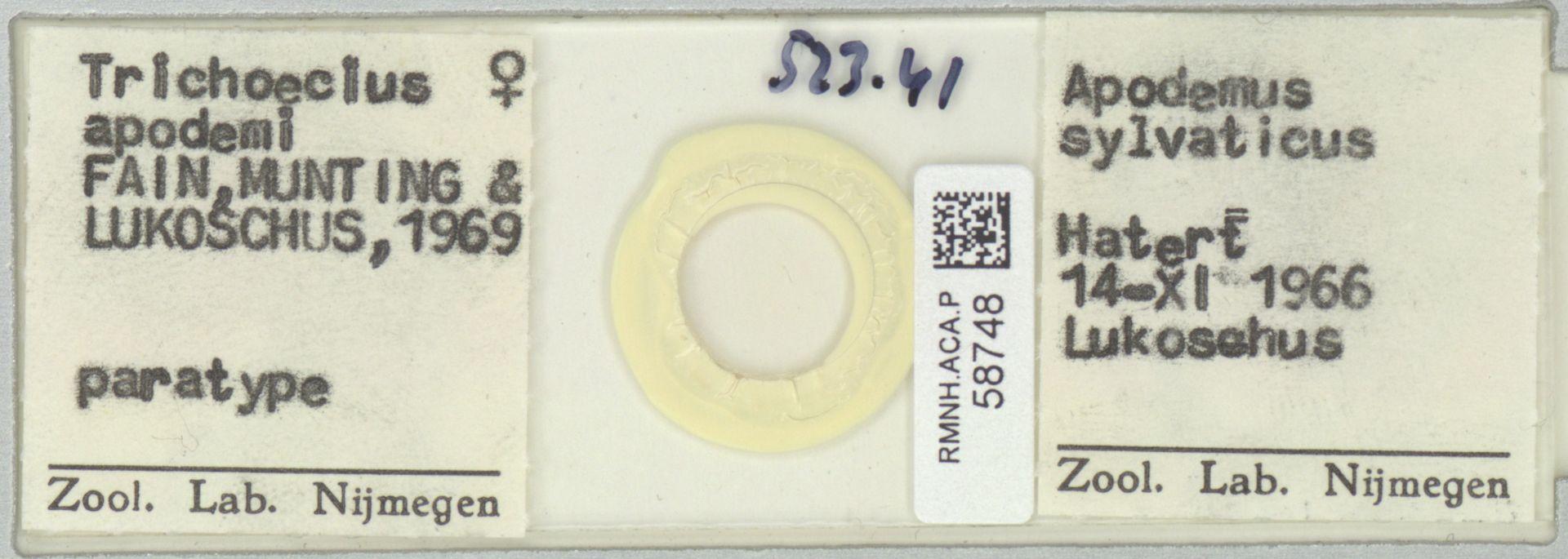 RMNH.ACA.P.58748   Trichoecius apodemi Fain, Munting & Lukoschus 1969
