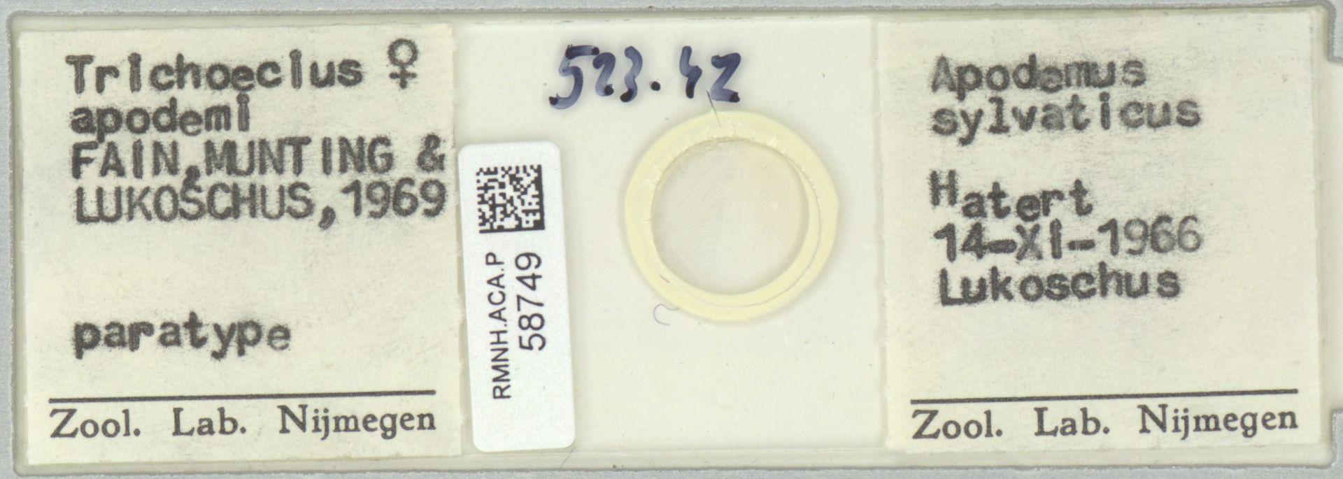 RMNH.ACA.P.58749   Trichoecius apodemi Fain, Munting & Lukoschus, 1969