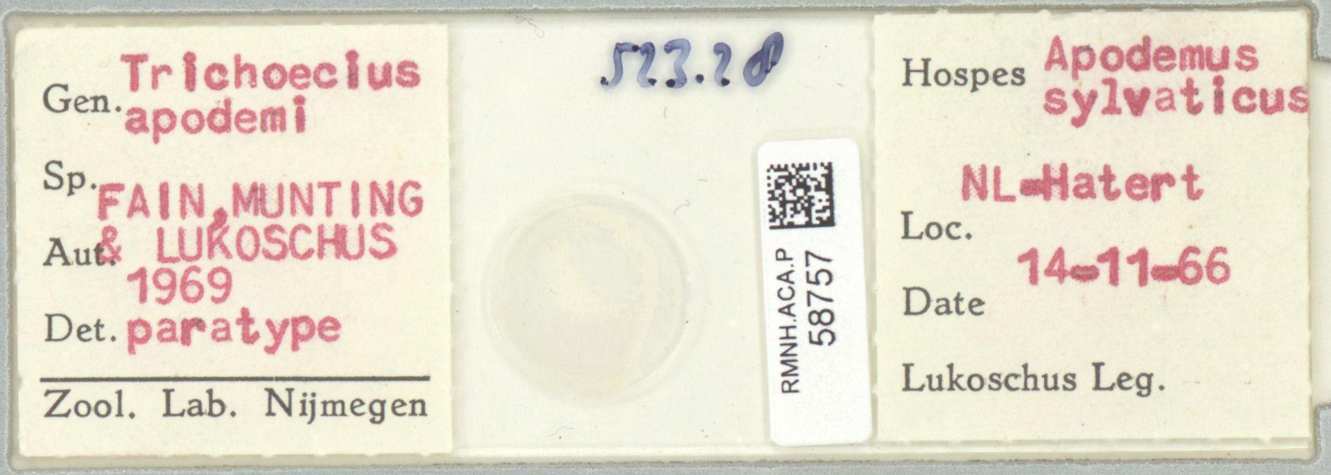RMNH.ACA.P.58757   Trichoecius apodemi Fain, Munting & Lukoschus 1969