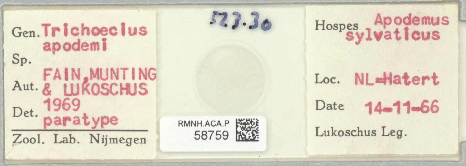 RMNH.ACA.P.58759   Trichoecius apodemi Fain, Munting, Lukoschus 1969