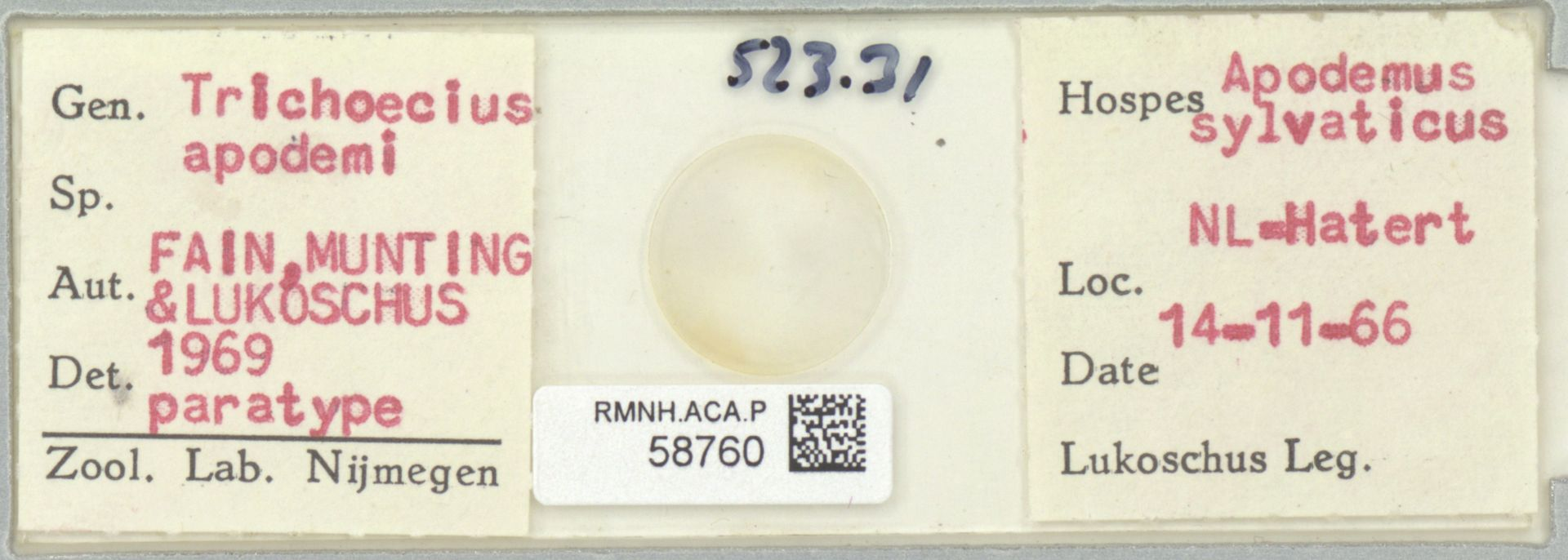 RMNH.ACA.P.58760 | Trichoecius apodemi Fain, Munting & Lukoschus 1969