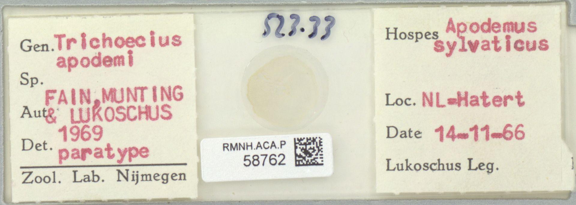 RMNH.ACA.P.58762   Trichoecius apodemi Fain, Munting & Lukoschus 1969