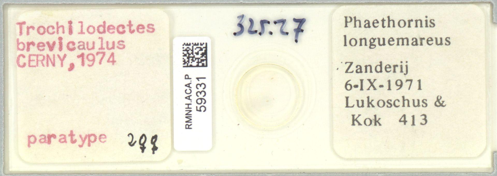 RMNH.ACA.P.59331 | Trochilodectes brevicaulus Cerny, 1974