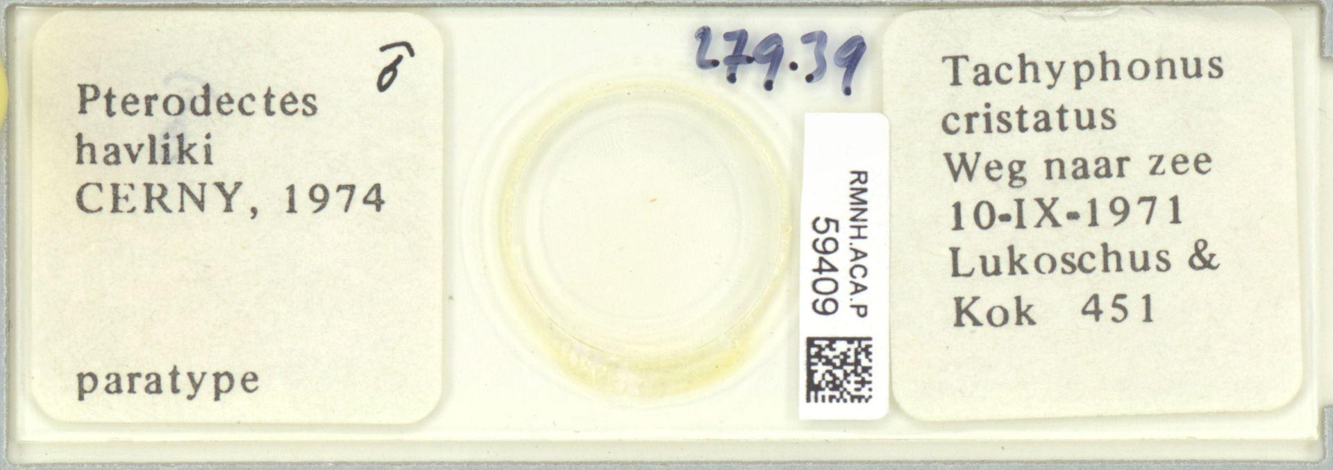 RMNH.ACA.P.59409 | Pterodectes havliki Cerny, 1974