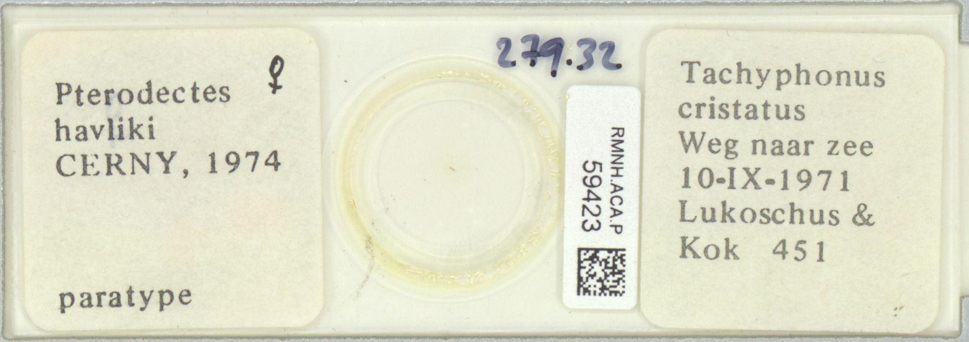 RMNH.ACA.P.59423 | Pterodectes havliki Cerny, 1974