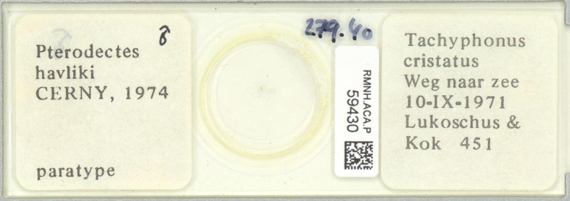 RMNH.ACA.P.59430 | Pterodectes havliki Cerny, 1974