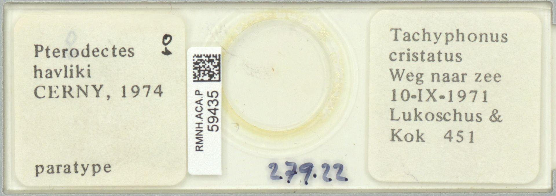 RMNH.ACA.P.59435 | Pterodectes havliki Cerny, 1974