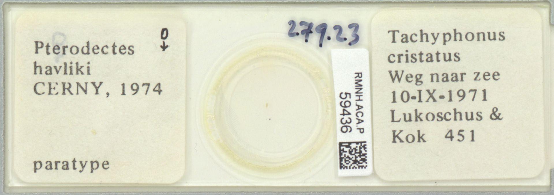 RMNH.ACA.P.59436 | Pterodectes havliki Cerny, 1974