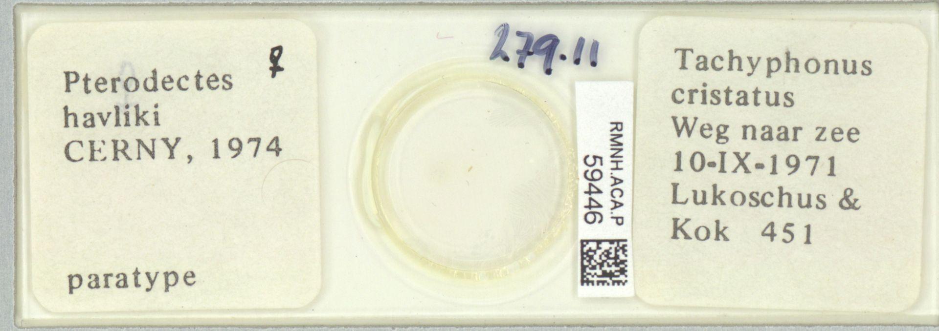 RMNH.ACA.P.59446   Pterodectes havliki Cerny, 1974