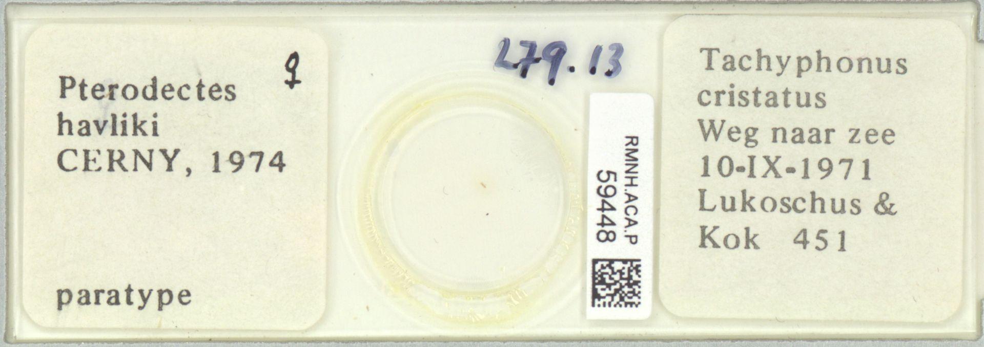 RMNH.ACA.P.59448 | Pterodectes havliki Cerny, 1974