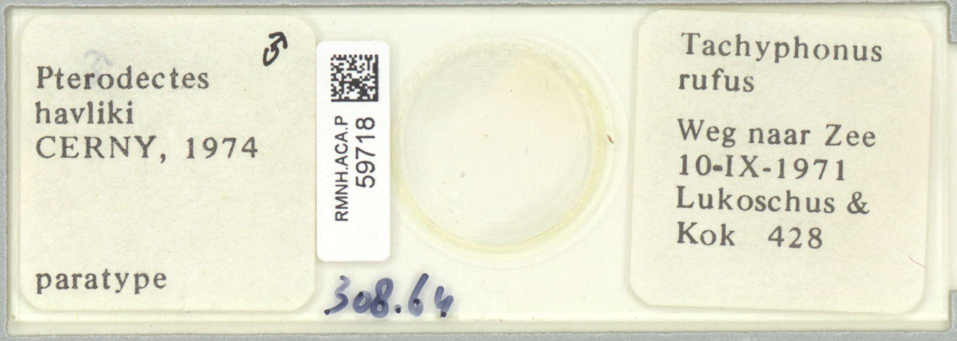 RMNH.ACA.P.59718 | Pterodectes havliki Cerny, 1974