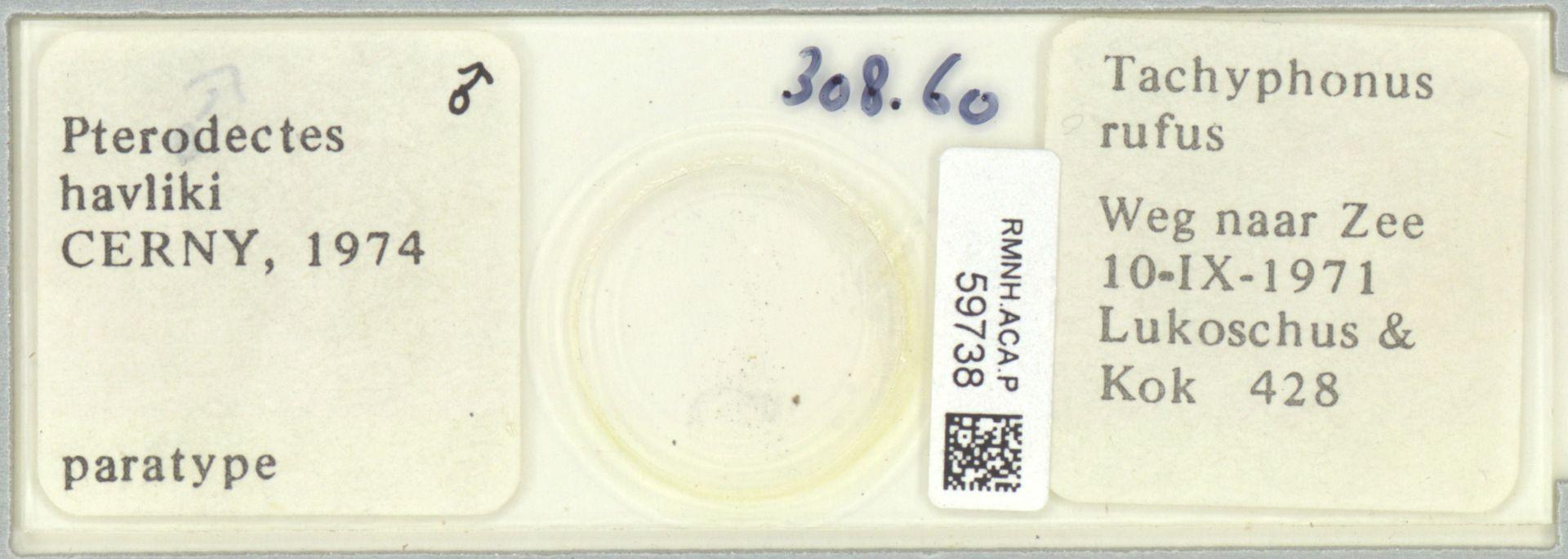 RMNH.ACA.P.59738 | Pterodectes havliki Cerny, 1974