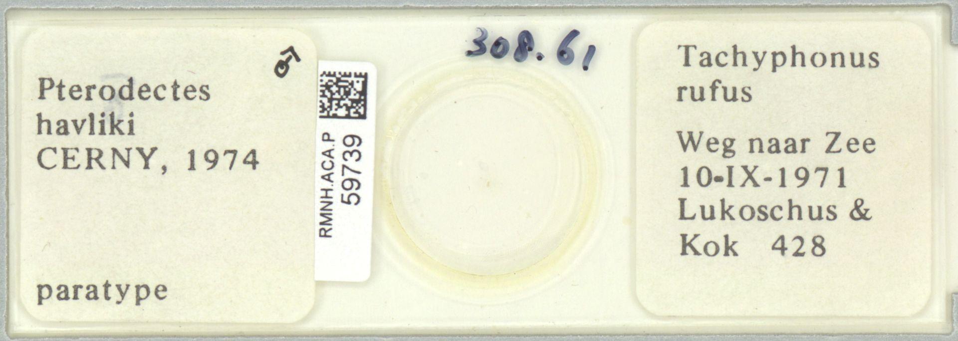 RMNH.ACA.P.59739 | Pterodectes havliki Cerny, 1974