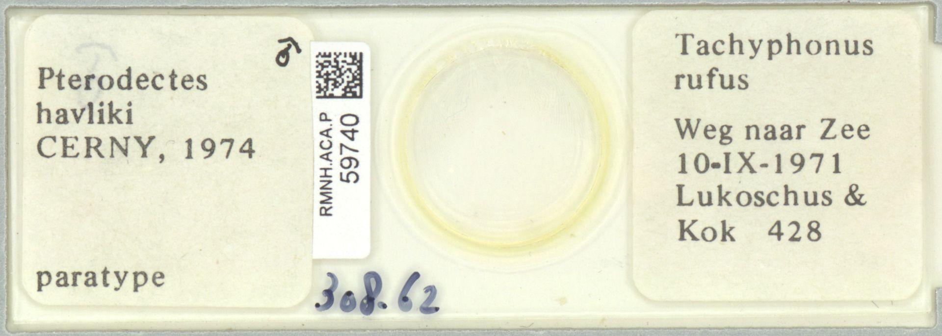 RMNH.ACA.P.59740 | Pterodectes havliki Cerny, 1974