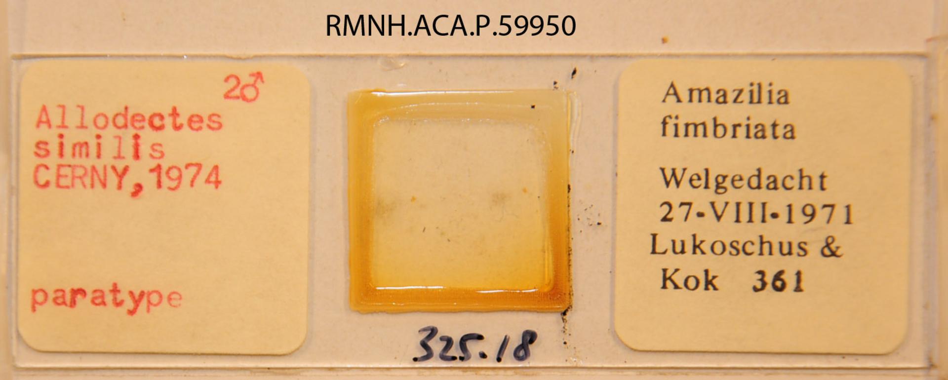 RMNH.ACA.P.59950 | Allodectes similis Cerny, 1974