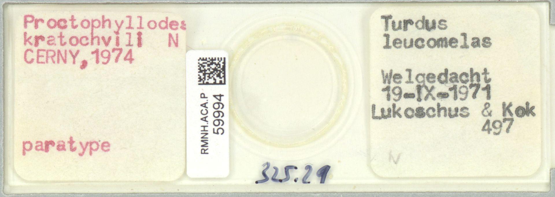 RMNH.ACA.P.59994 | Proctophyllodes kratochvili Cerny, 1974