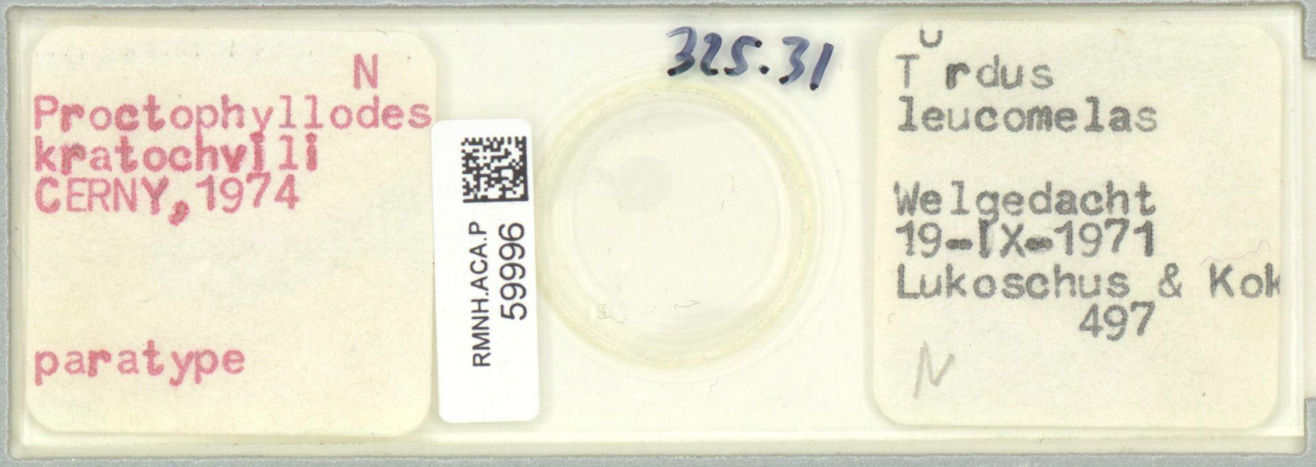 RMNH.ACA.P.59996 | Proctophyllodes kratochvili Cerny, 1974