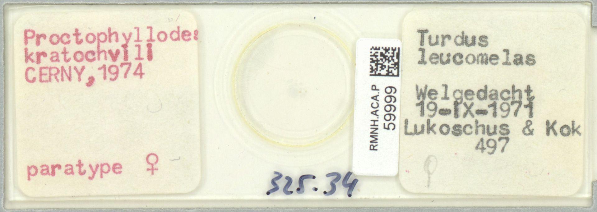RMNH.ACA.P.59999   Proctophyllodes kratochvili Cerny, 1974