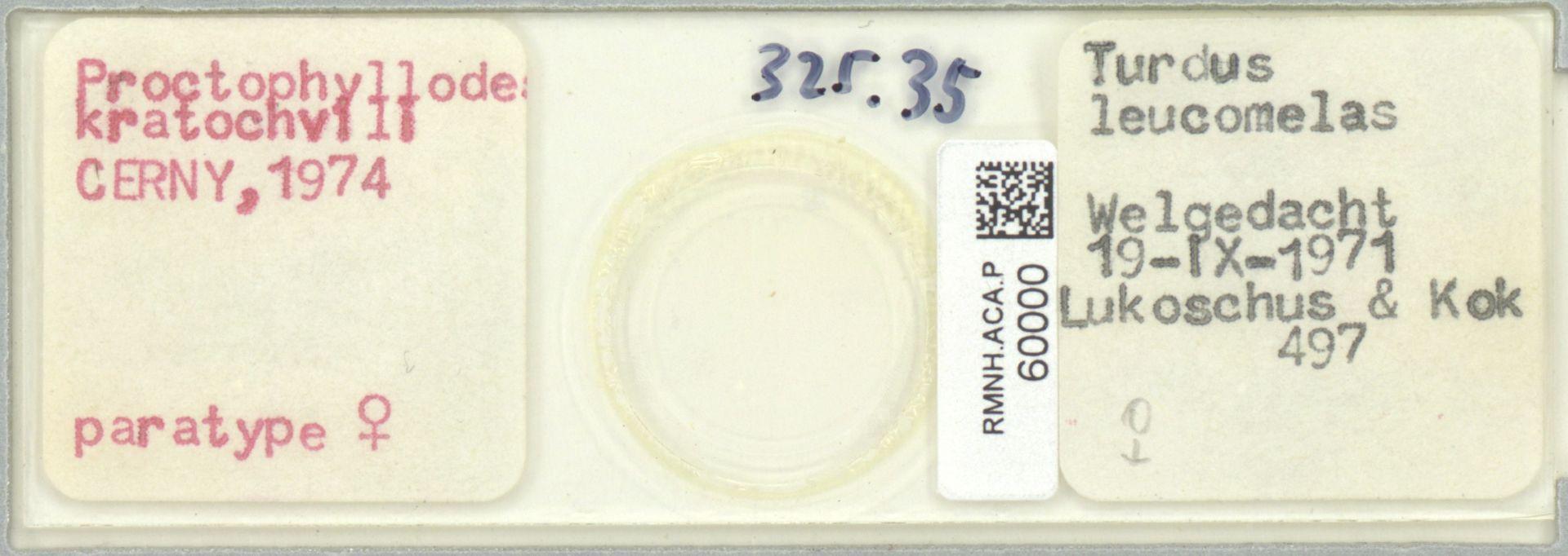 RMNH.ACA.P.60000 | Proctophyllodes kratochvili Cerny, 1974