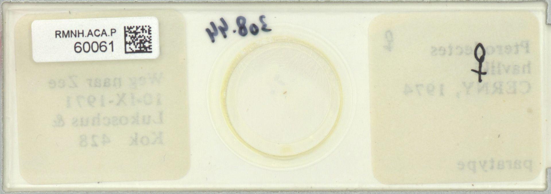 RMNH.ACA.P.60061   Pterodectes havliki Cerny, 1974