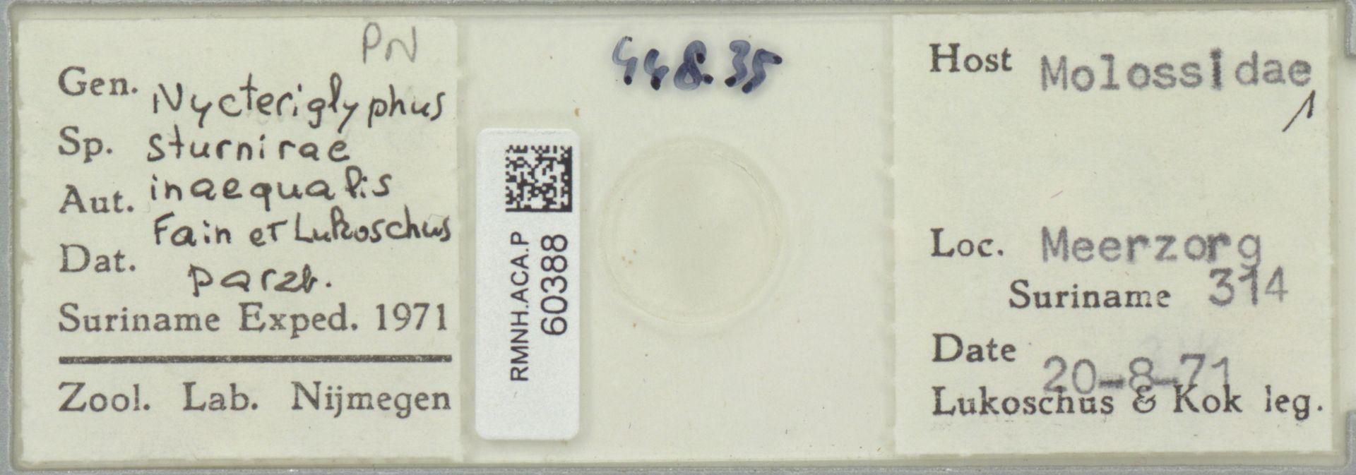 RMNH.ACA.P.60388 | Nycteriglyphus sturnirae inaequalis Fain & Lukoschus