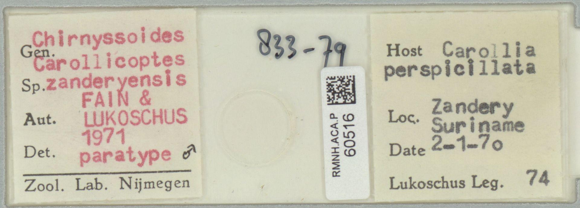 RMNH.ACA.P.60516 | Chirnyssoides (Carollicoptes) zanderyensis Fain & Lukoschus 1971