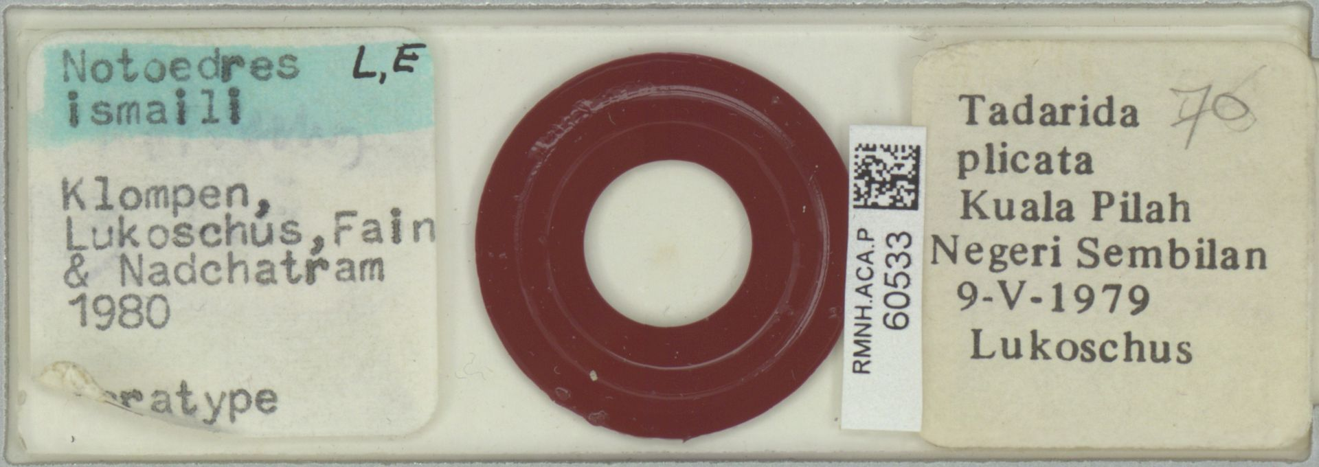 RMNH.ACA.P.60533 | Notoedres ismaili Klompen, Lukoschus, Fain & Nadchatram 1980