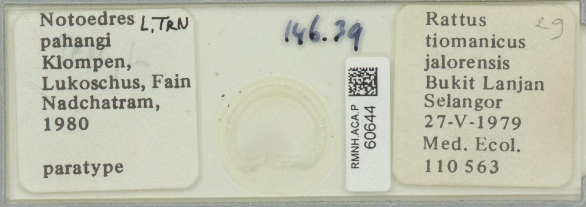 RMNH.ACA.P.60644 | Notoedres pahangi Klompen, Lukoschus, Fain Nadchatram, 1980