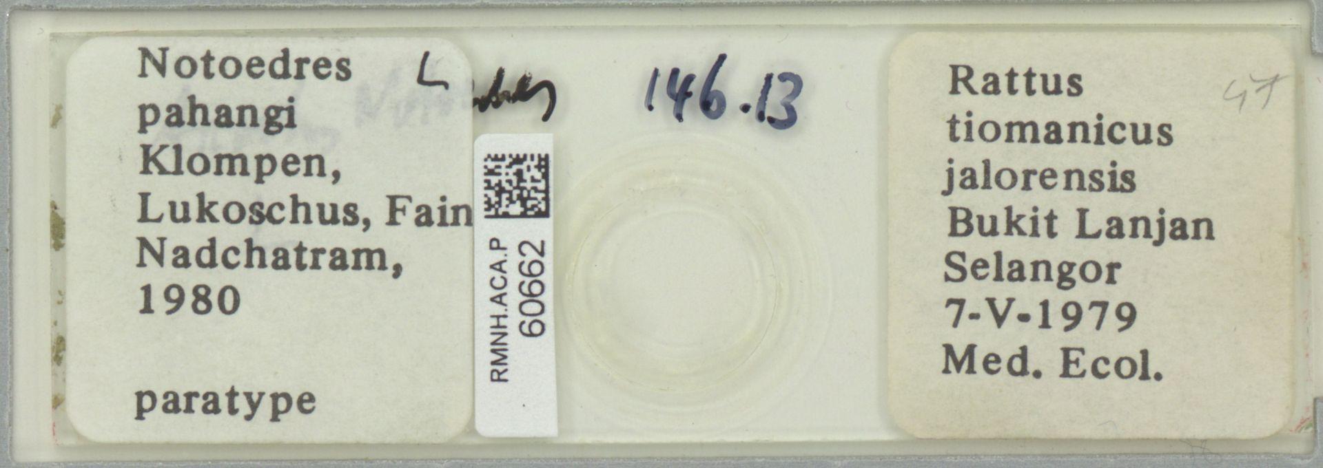 RMNH.ACA.P.60662 | Notoedres pahangi Klompen, Lukoschus, Fain & Nadchatram 1980