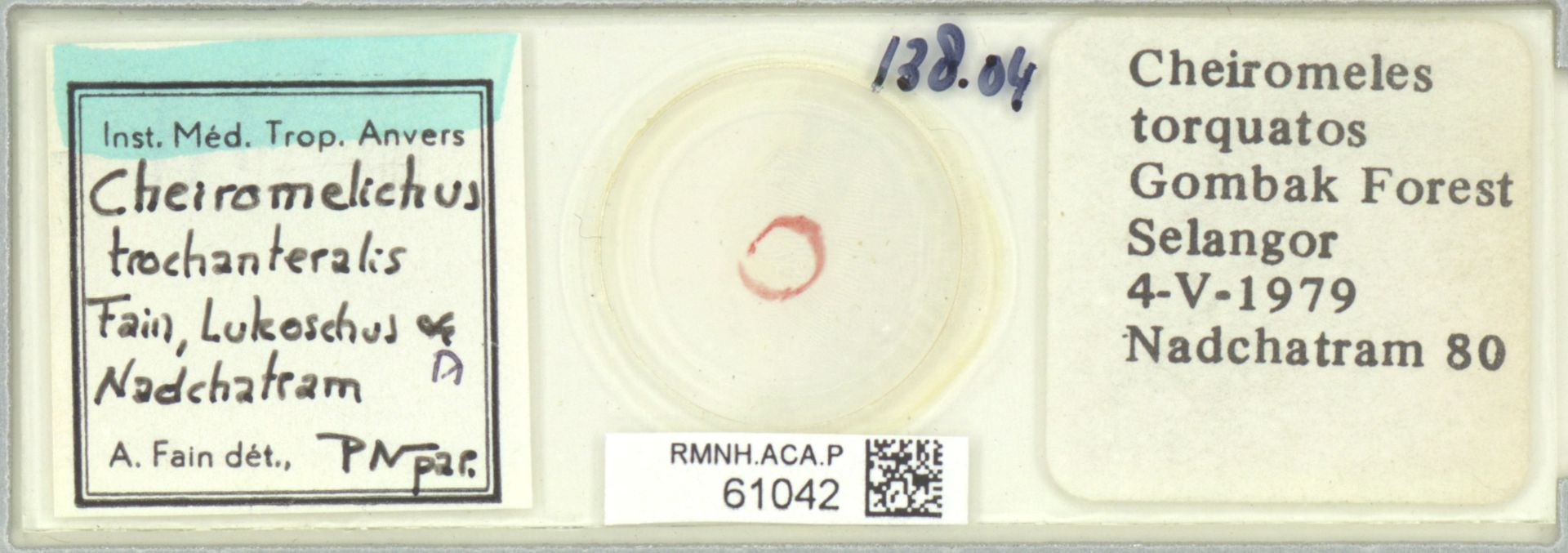 RMNH.ACA.P.61042 | Cheiromelichus trochanteralis Fain, Lukoschus & Nadchatram