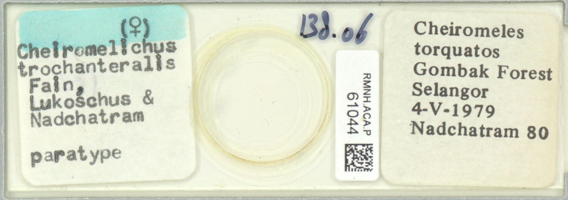 RMNH.ACA.P.61044 | Cheiromelichus trochanteralis Fain, Lukoschus & Nadchatram