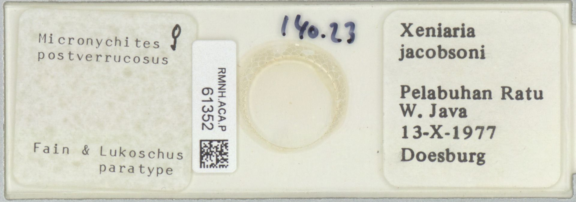 RMNH.ACA.P.61352 | Micronychites postverrucosus Fain & Lukoschus