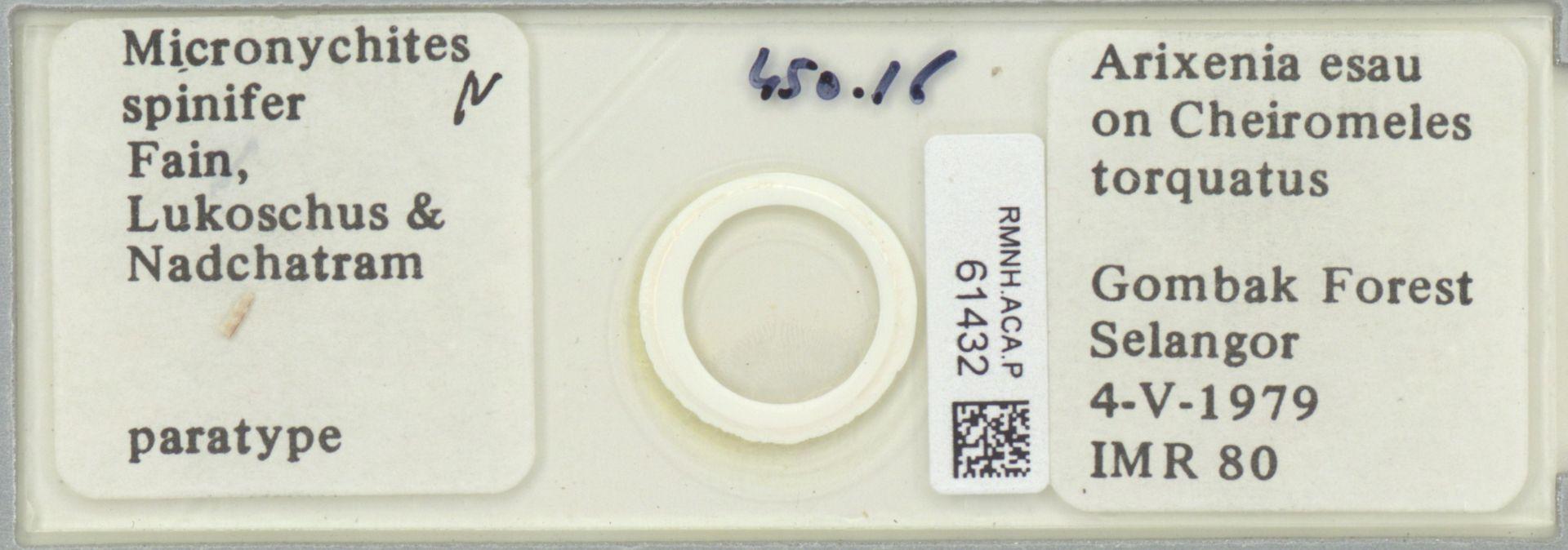RMNH.ACA.P.61432 | Micronychites spinifer Fain, Lukoschus & Nadchatram