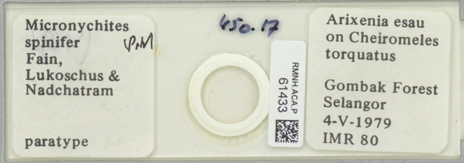 RMNH.ACA.P.61433 | Micronychites spinifer Fain, Lukoschus & Nadchatram
