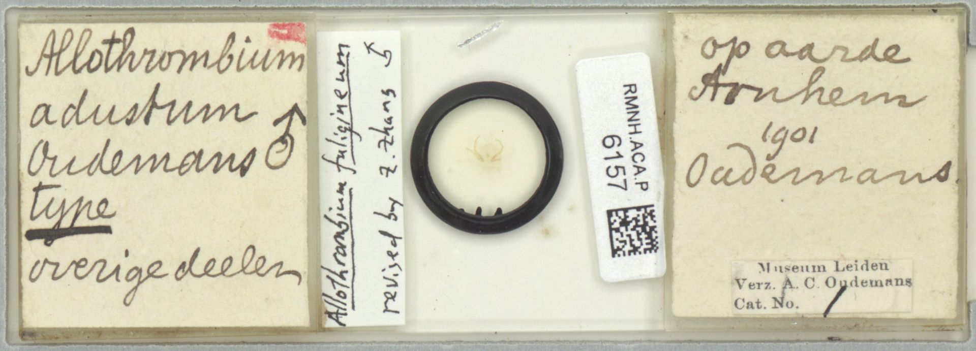 RMNH.ACA.P.6157 | Allothrombium fuligineum