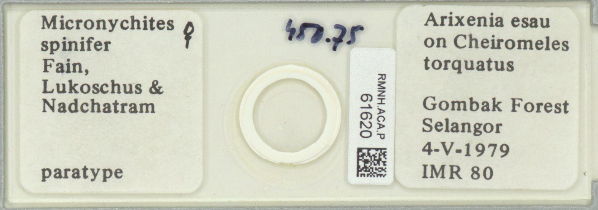 RMNH.ACA.P.61620 | Micronychites spinifer Fain, Lukoschus & Nadchatram