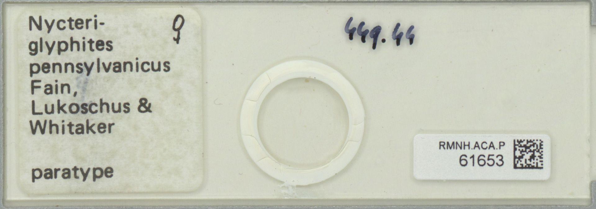 RMNH.ACA.P.61653 | Nycteriglyphites pennsylvanicus Fain, Lukoschus & Whitaker