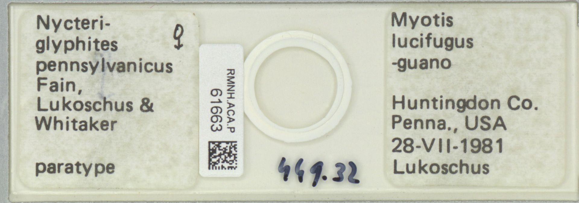 RMNH.ACA.P.61663   Nycteriglyphites pennsylvanicus Fain, Lukoschus & Whitaker