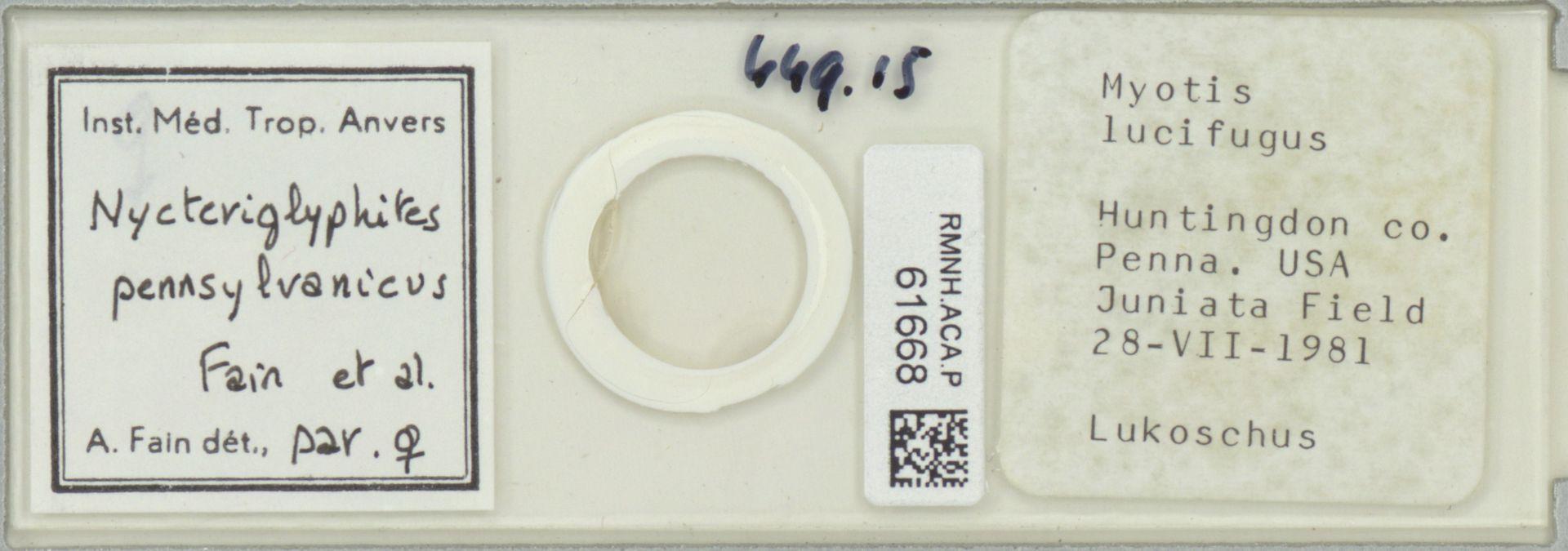 RMNH.ACA.P.61668 | Nycteriglyphites pennsylvanicus Fain et al