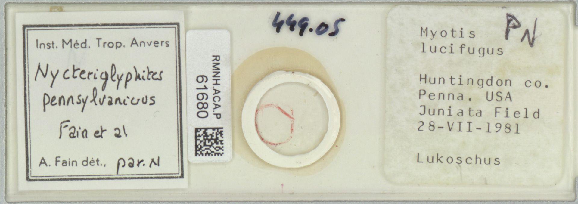 RMNH.ACA.P.61680 | Nycteriglyphites pennsylvanicus Fain et al