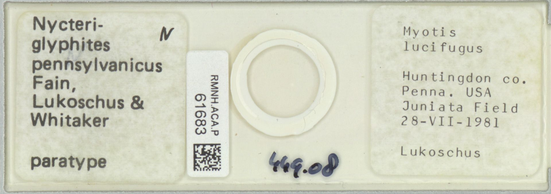 RMNH.ACA.P.61683 | Nycteriglyphites pennsylvanicus Fain, Lukoschus & Whitaker