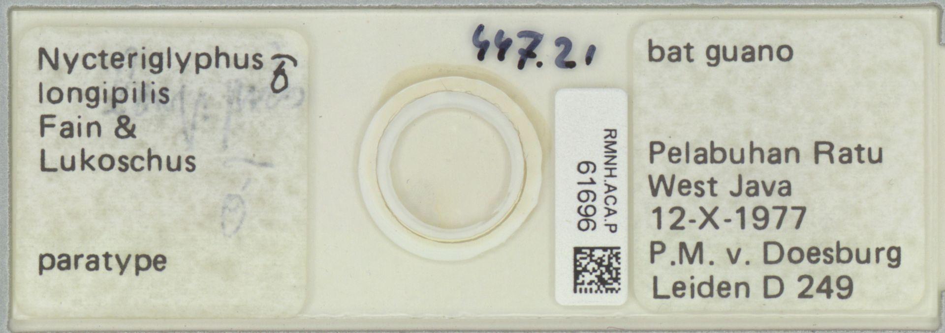 RMNH.ACA.P.61696 | Nycteriglyphus longipilis Fain & Lukoschus