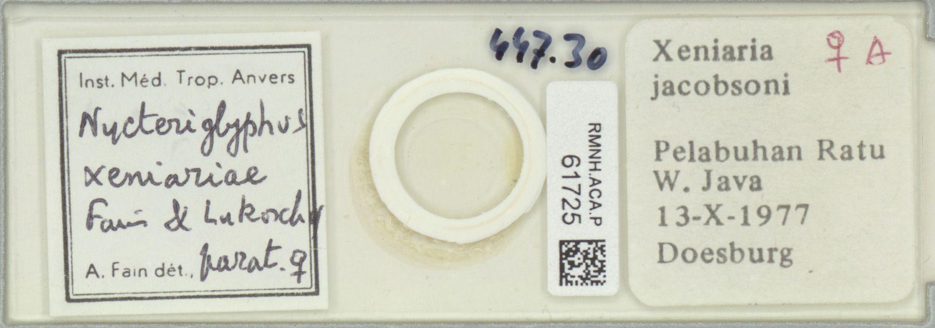 RMNH.ACA.P.61725   Nycteripglyphus xeniariae Fain & Lukoschus