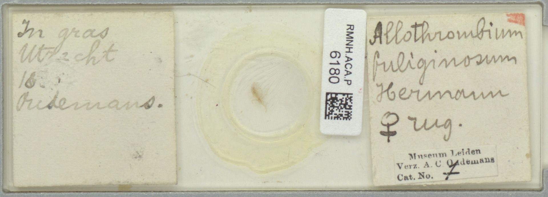 RMNH.ACA.P.6180 | Allothrombium fuliginosum Hermann, 1804
