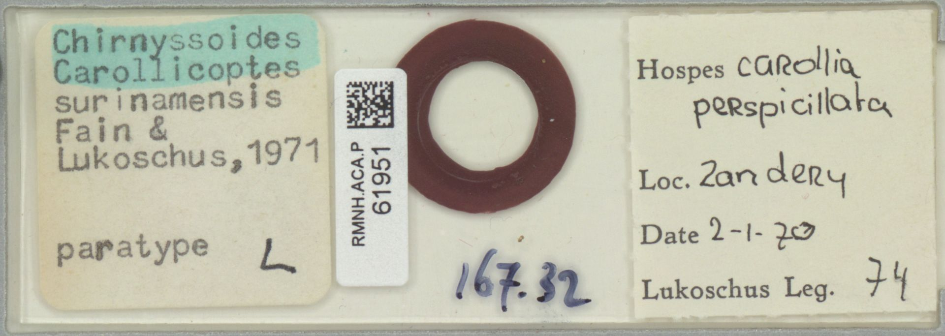 RMNH.ACA.P.61951 | Chirnyssoides carollicoptes surinamensis Fain & Lukoschus, 1971