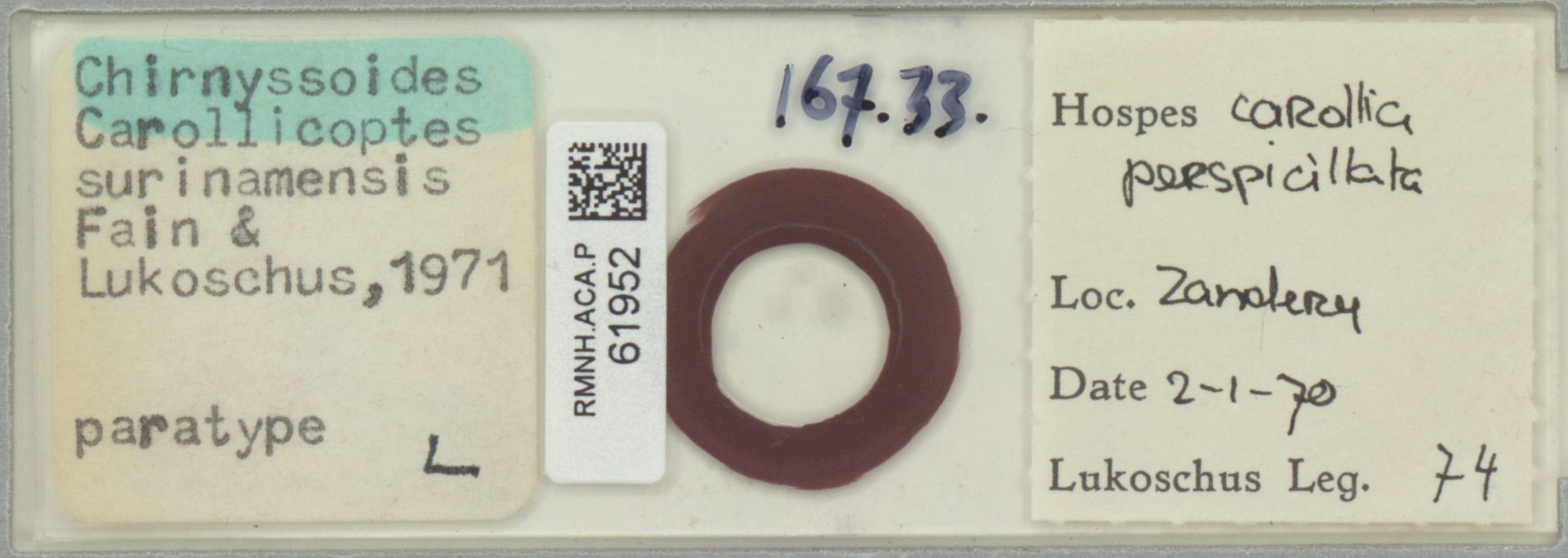 RMNH.ACA.P.61952 | Chirnyssoides (Carrolicoptes) surinamensis Fain & Lukoschus 1971