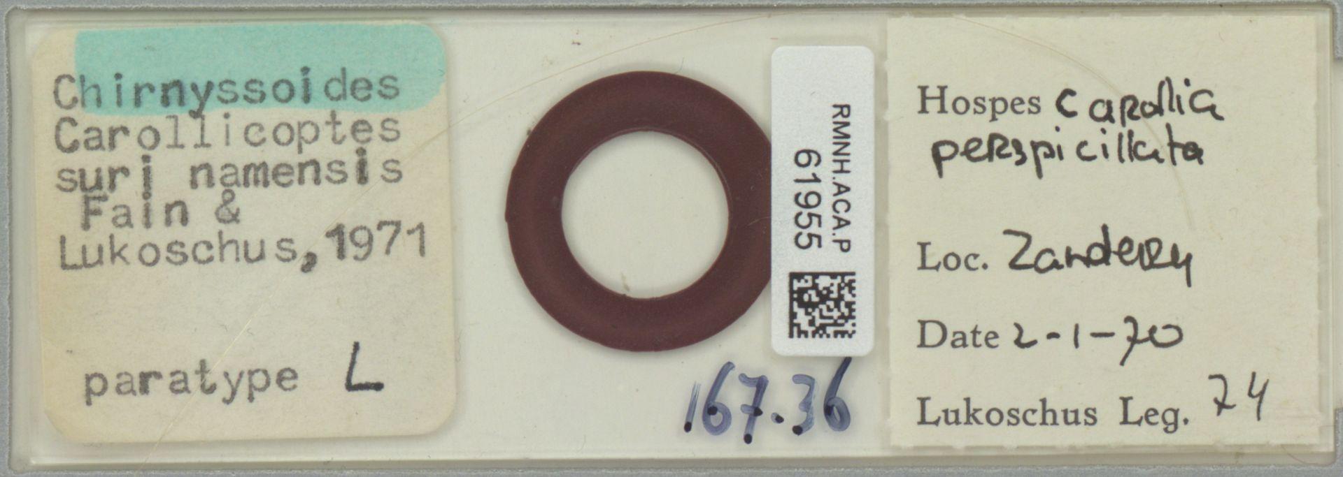 RMNH.ACA.P.61955 | Chirnyssoides carollicoptes surinamensis Fain & Lukoschus 1971