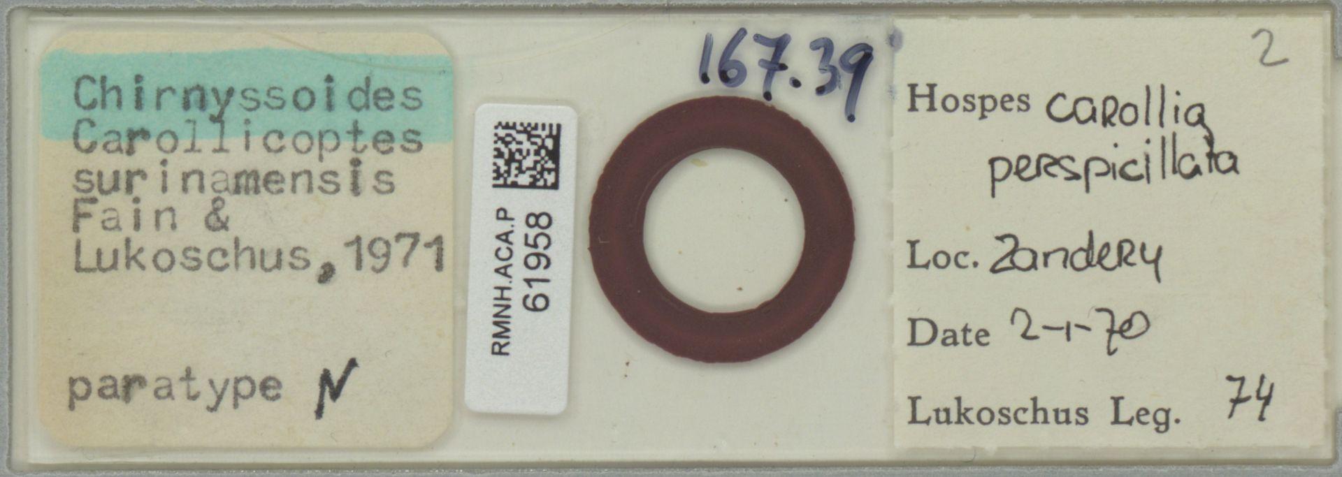 RMNH.ACA.P.61958 | Chirnyssoides (Carollicoptes) surinamensis Fain & Lukoschus, 1971